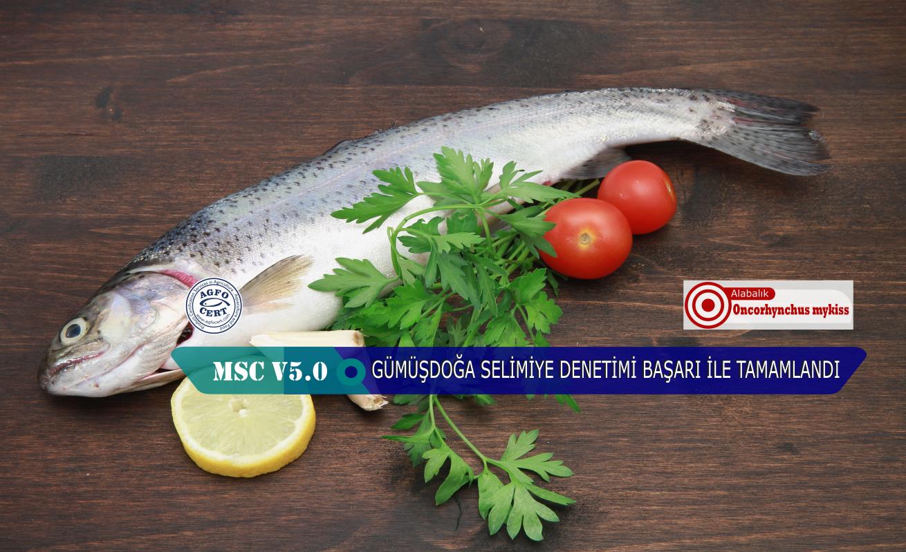 Gumusdoga-Selimiye-MSC5.0