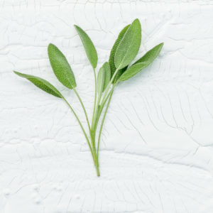 Closeup branch fresh sage leaves on white wooden background . Alternative medicine fresh salvia officinalis with flat lay.