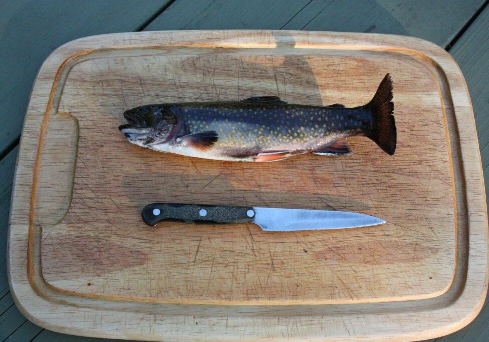 rainbow-trout-80339_1920