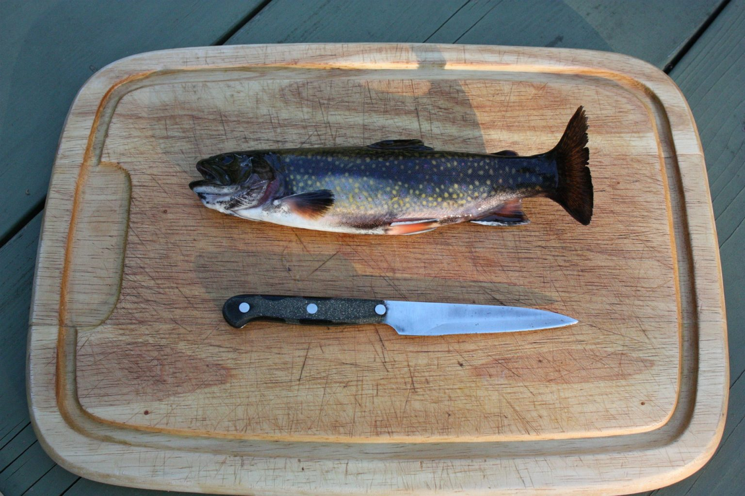 rainbow-trout-80339_1920