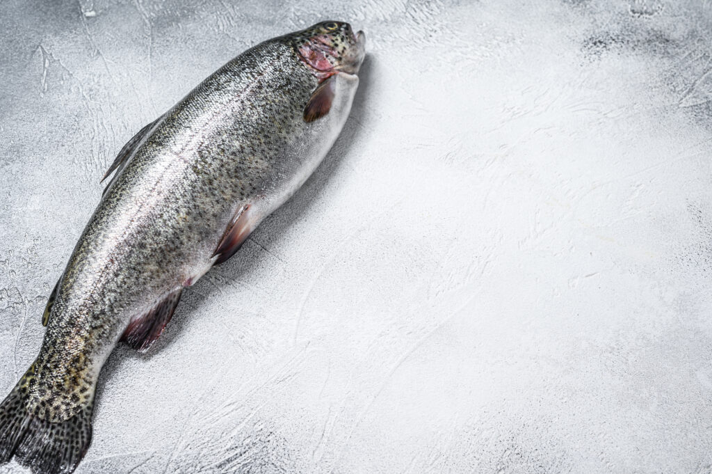 Raw Rainbow trout fish on a table. White background. Top view. Copy space.